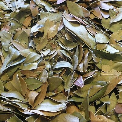 MYRTLE LEAF Myrthus communis DRIED HERB, Detox Herbal Tea 400g