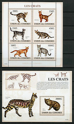 Comoros Comores 2009 MNH Cats Abyssinian Sokoke 6v M/S 1v S/S Chats Stamps