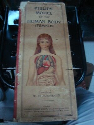 Old Vintage Female Human Body Interior Organ Parts Images Book from England 1930