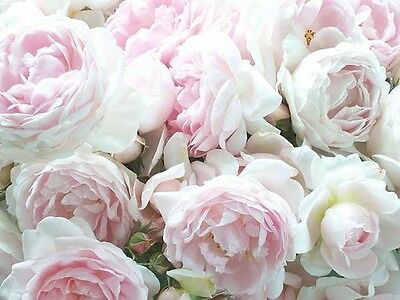 SET OF 6 X PERSONALISED 89 x120.7MM  PINK AND WHITE PEONIES  WINE BOTTLE LABELS