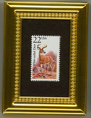 White-Tailed Deer - A Collectible Glass  Framed Postage Masterpiece!