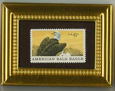 American Bald Eagle Nest & Chicks Glass Framed Collectible Postage Masterpiece!