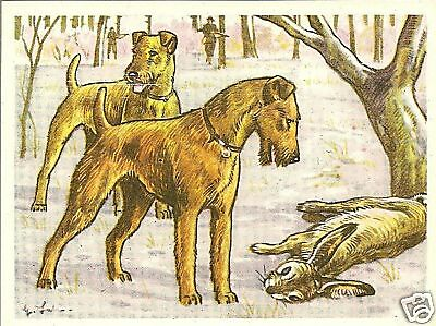 Rare 1952 Dog Art Print Austria Tobacco Company Bildwerk IRISH TERRIER & Game