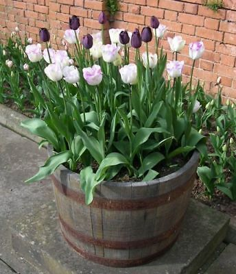 Two Retired Whiskey Barrel Planters Used Bourbon Whisky Oak Wood  Free Shipping!