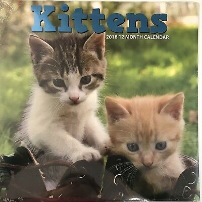 Kittens Cats 2018 Calendar 12 Month 12 X 12 Wall Hanging Animal Lover Cute NEW