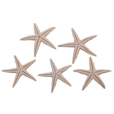 20x Mini Natural Starfish Shell Sea Star Crafts For Wedding Home Micro Landscape