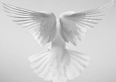 White Dove Wings Premium Wall Art Poster Print / Rolled Canvas - A0 A1 A2 A3 A4