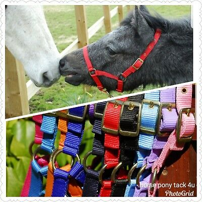 FREE LEADROPE FOAL BRASS HEADCOLLAR 11 COLOURS STRONG now with free leadrope