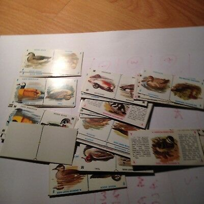 Joblot of Rare Vintage Plumage Domino Cards- See Pictures!