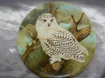 Coalport  Bone  China Collectors Plate SNOWY OWL  The Wise Owl Michael B. Sawdy