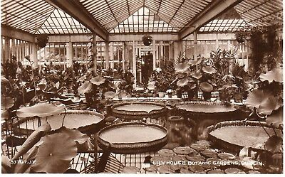 r.p. postcard of Lily House, botanical gardens, Dublin, 1920s