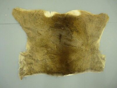 Luxury high quality Roe Deer skin hide fur pelt rug new clean soft and fluffy VI
