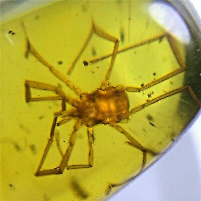 Fossil insect Natural Burmite Amber 100 million years old (Untreated) 1.35 ct