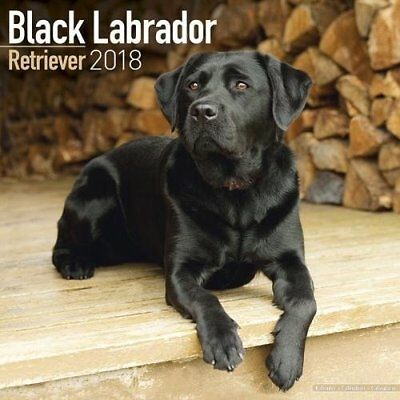 Black Labrador Retriever 2018 Wall Calendar - 30x30cm - Beautiful images