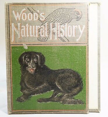 Ebx:  VINTAGE BOOK COVER WITH NEWFOUNDLAND DOG COVER Newfie