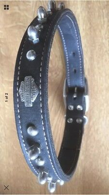 Harley Davidson Dog  Collar