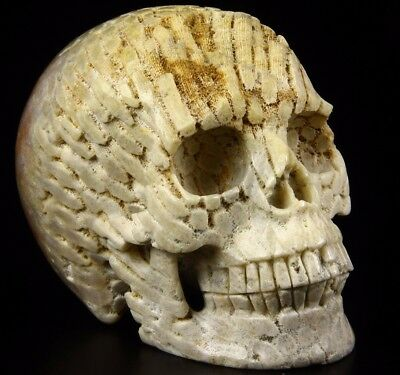 """Huge 5.1"""" CORAL FOSSIL Carved Crystal Skull, Realistic,Crystal Healing"""