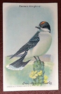 Church & Dwight Co - Useful Birds trade card, 9th series - Eastern Kingbird