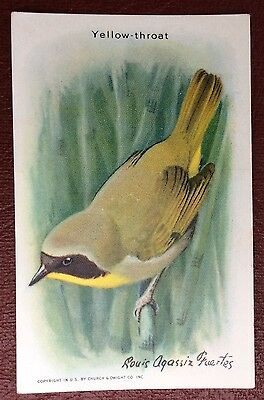 Church & Dwight Co - Useful Birds trade card, 9th series - Yellow-Throat