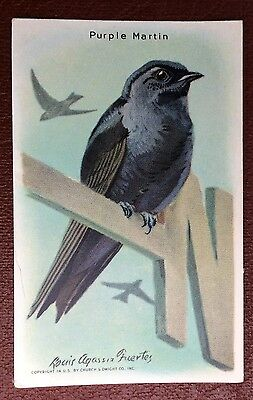 Church & Dwight Co - Useful Birds trade card, 9th series - Purple Martin