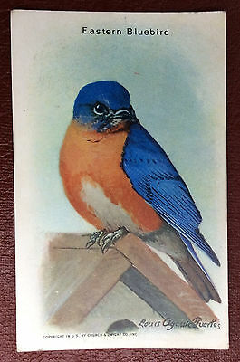 Church & Dwight Co - Useful Birds trade card, 9th series - Eastern Bluebird
