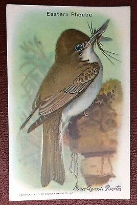 Church & Dwight Co - Useful Birds trade card, 9th series - Eastern Pheobe