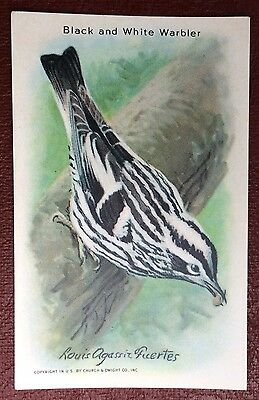 Church & Dwight Co - Useful Birds trade card, 9th series - Black & White Warbler
