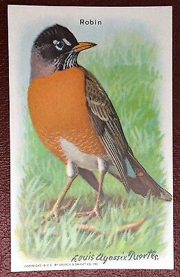 Church & Dwight Co - Useful Birds trade card, 9th series - Robin
