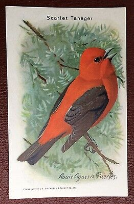 Church & Dwight Co - Useful Birds trade card, 9th series - Scarlet Tanager