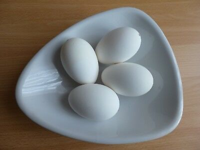 Four Blown Goose Eggs For Crafting