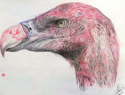 "Original A3 coloured pencil drawing ""bloody vulture"" on quality cartridge paper"