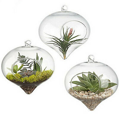 3 Pcs Glass Hanging Planter Air Plant Pot Candle Holder Air Plant Terrariums
