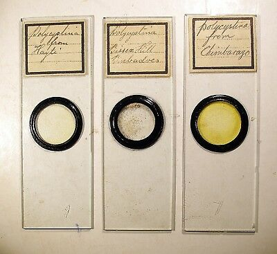 3 x Antique Marine MICROSCOPE SLIDES,  POLYCISTINA, Various Locations