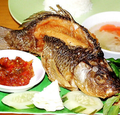 new food ikan goreng gurami recipe joss nnm