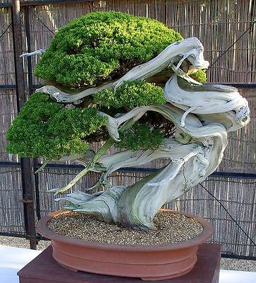 ebook,bonsai ebook,Growing bonsai plants,