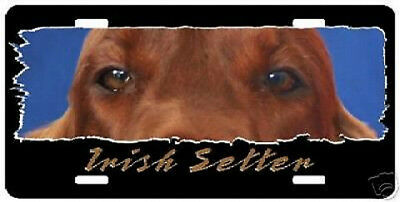 "Irish Setter   "" The Eyes Have It ""  License Plate"