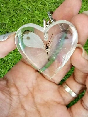 Real Mini White Butterfly in Clear Resin Heart Pendant Key Ring insect Gift