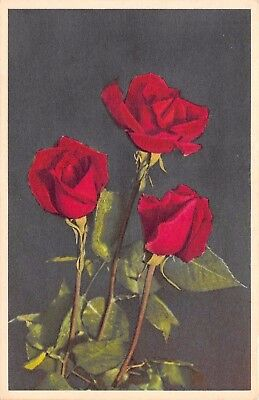 Postcard Plants Three Red Roses Flowers Unposted PC