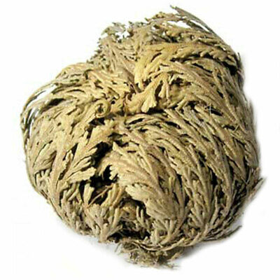 ONE Jericho Flower (Rose of Jericho, Resurrection Flower) Dried Herb