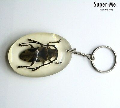 Brown Long Horn Beetle Real insect Collection in Clear Resin Key Ring Gift