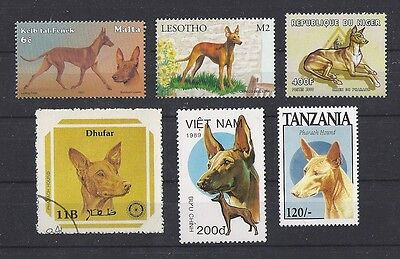 Dog Art Head & Body Postage Stamp Collection PHARAOH HOUND 6 Different MNH CTO