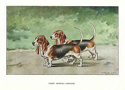 1930s Castellan France Dog Art Watercolor Print BASSET HOUND ARTESIEN NORMAND