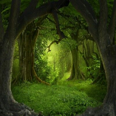 8x8' Background Trees Forest Scene Photography Backdrop Studio Props