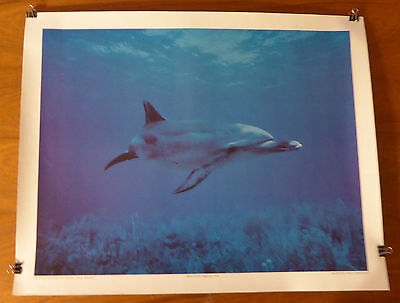 Litho of Spotted Dolphin from Skin Diver Magazine 1978 - Paul Tzimoulis