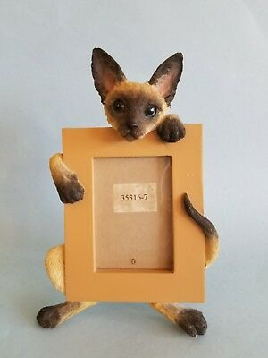 Siamese Cat Picture Frame Photo
