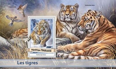 Togo 2017 MNH Tigers Sparrows 1v S/S Birds Big Cats Wild Animals Stamps