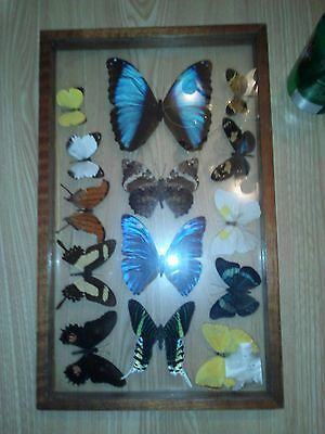 Real BUTTERFLIES BUTTERFLY Collection Lot 14 pieces Framed Double-Sided Glass