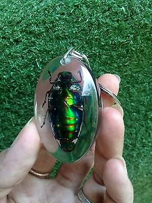 Real Taxidermy Bug Beetle Shape Key Ring Insect Wing Keychain Green Drop Glow