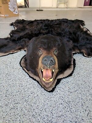 Real Alaskan taxidermy black bear rug