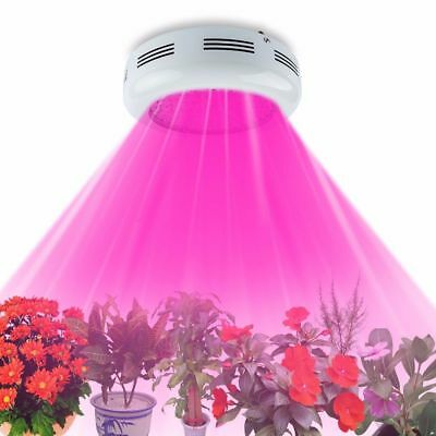 300W LED Plant Grow Light Full Spectrum Hydroponic For Indoor Medical Veg Bloom